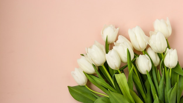 Bouquet of fresh spring white tulips on a light pastel background, copy space, horizontal orientation Premium Photo