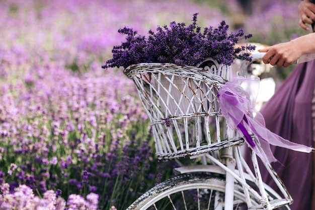 A bouquet of lavender in a basket on a bicycle in a lavender field a girl Premium Photo