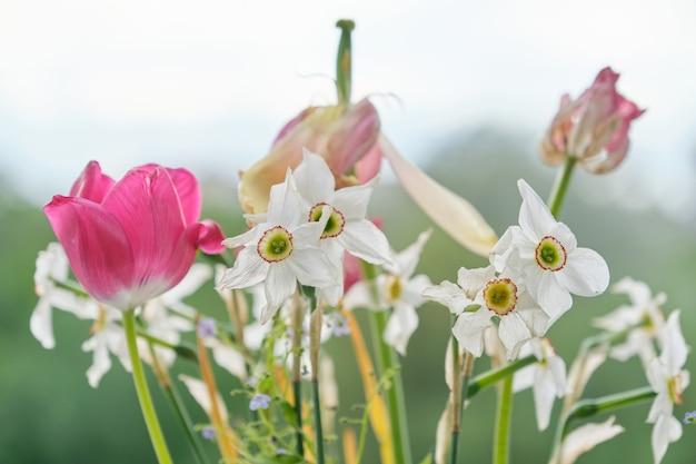 色あせた春の花、チューリップ、白い水仙の花束が乾いた Premium写真