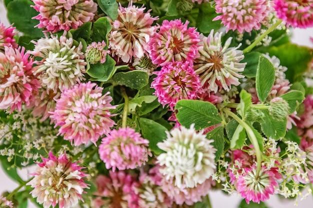 ピンクのクローバーの花の花の背景の花束 Premium写真