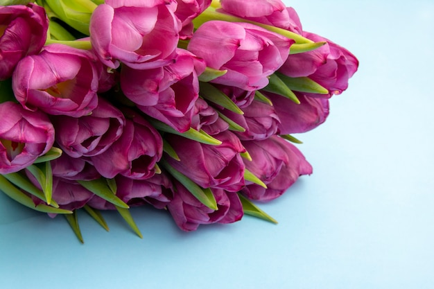 ピンクのチューリップの花束/イースターの日の背景。青色の背景、webバナーのチューリップの花束 Premium写真