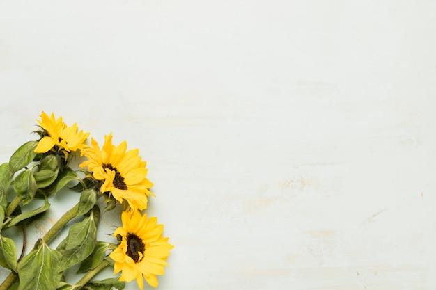 ひまわりの花束 Premium写真