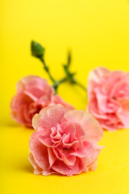 Bouquet of pink carnations flowers Premium Photo