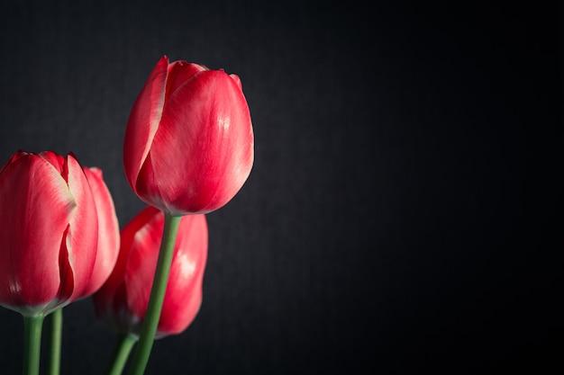 Bouquet of red tulips Premium Photo