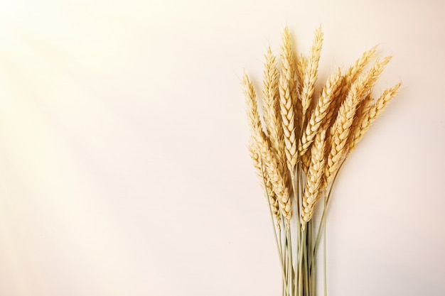 Bouquet of ripe ears of wheat Premium Photo