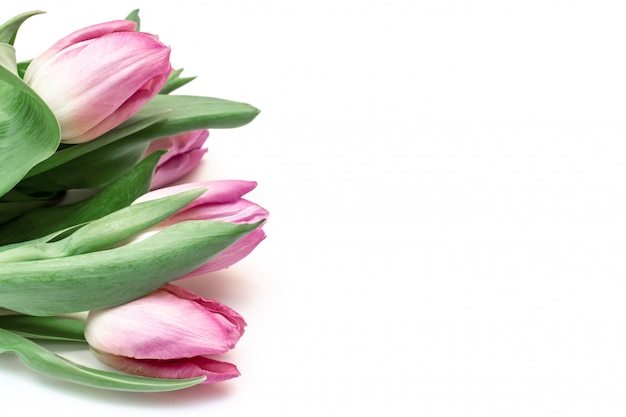Bouquet of spring flowers, pink tulips on white background, copy space Premium Photo