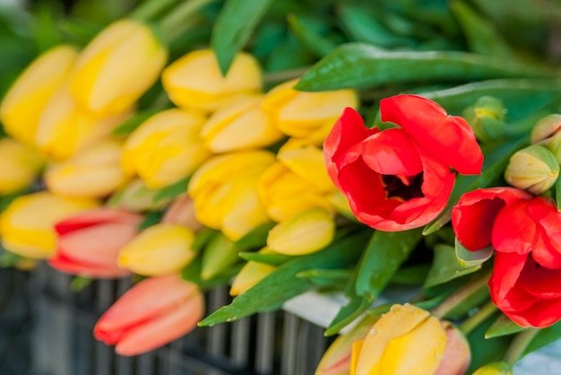 Bouquet of tulips in front of spring scene. bouquets of tulips for sale Free Photo