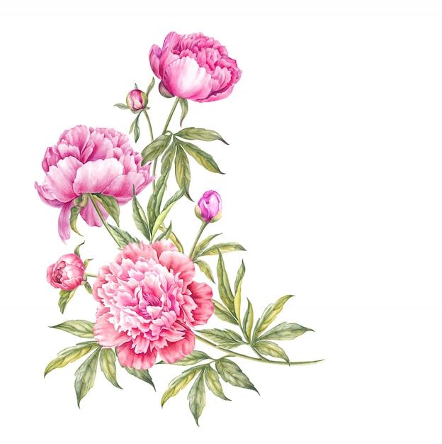 Bouquet of watercolor pink peonies. Premium Photo