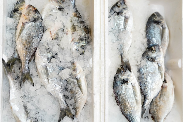 Box with frozen fish on ice in food store Premium Photo