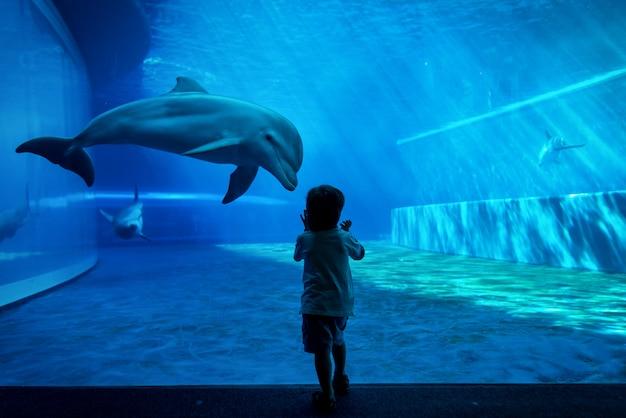 イルカを見ている少年 Premium写真