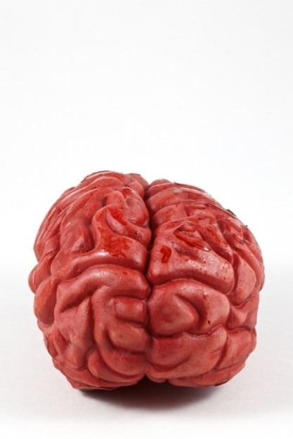 Brain prop Free Photo