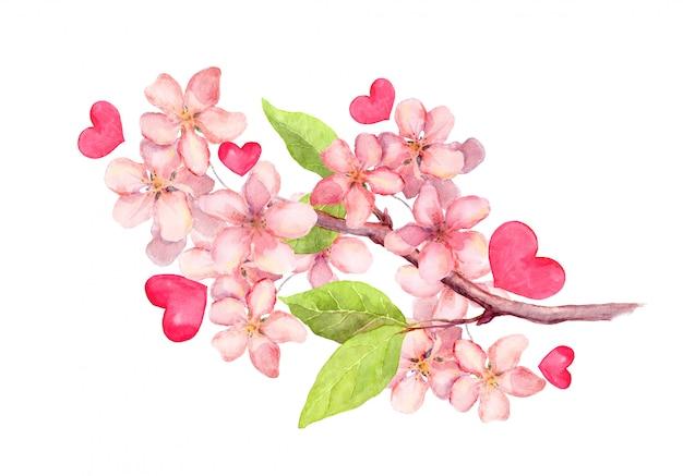 リンゴの花、桜の花の枝。ビンテージの水彩画ボタニカルイラスト Premium写真
