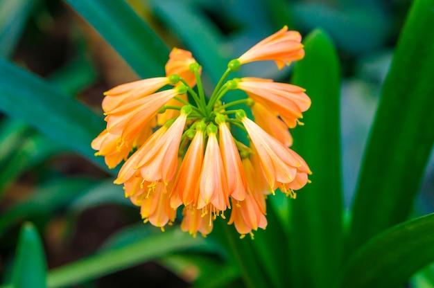 美しいオレンジ色のユリズイセン科の花の枝 無料写真