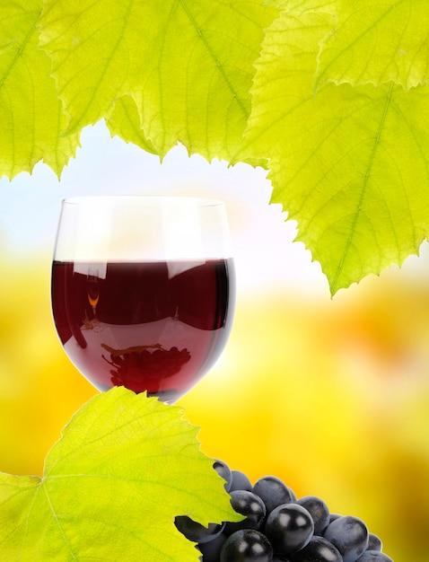 Филиал винограда и бокал вина Бесплатные Фотографии