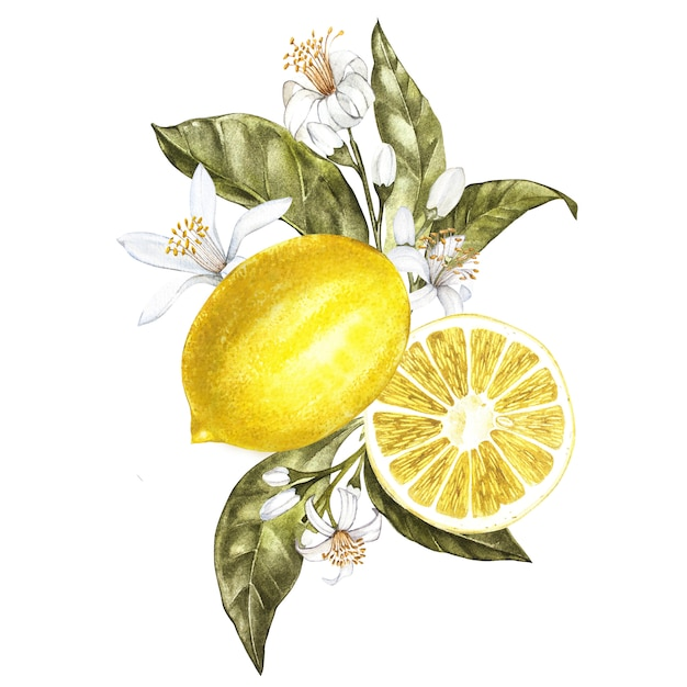Branch of watercolor lemon tree with leaves, yellow lemons and flowers Premium Photo