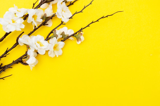 Branch of white flowers on yellow background spring floral mock up. minimalistic spring background with copy space. Premium Photo