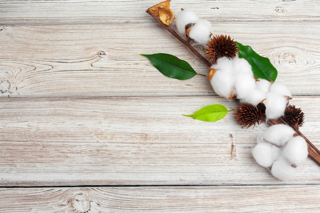 Branch with cotton flowers on wooden background Premium Photo