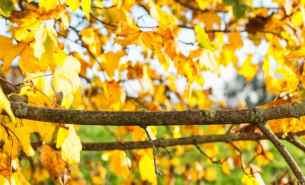 Branch with natural background Premium Photo