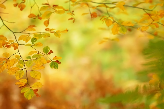 Branches of autumn trees on a blurred background Premium Photo