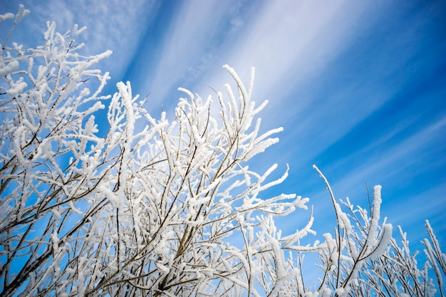 Branches covered with frost against  picturesque backdrop of the sky. Premium Photo