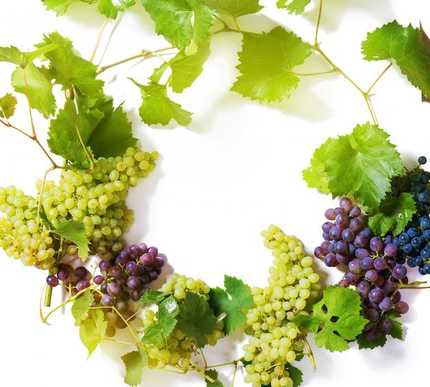 Ветви зеленого и синего винограда, изолированные на белом Premium Фотографии