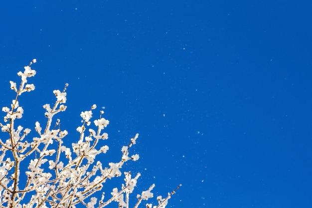 晴れた冬の日、青い空を背景に、霜で覆われた木の枝 Premium写真