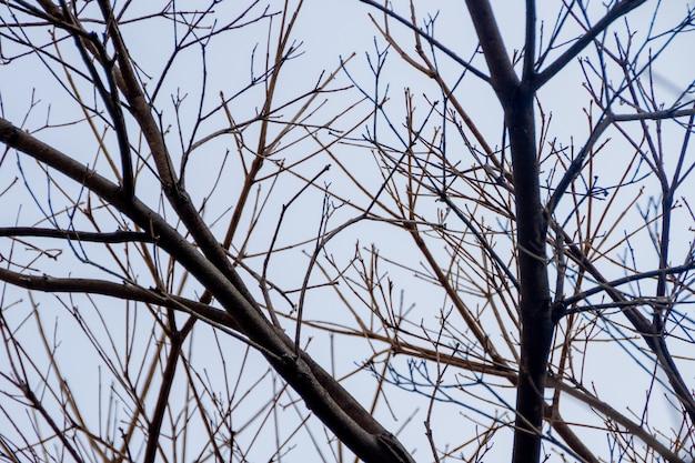 美しい青い空とイペの木の枝 Premium写真