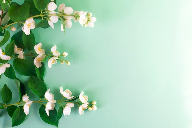 Ветки цветущего жасмина Premium Фотографии