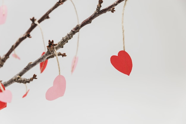 Branches of a plant with hanging hearts Free Photo