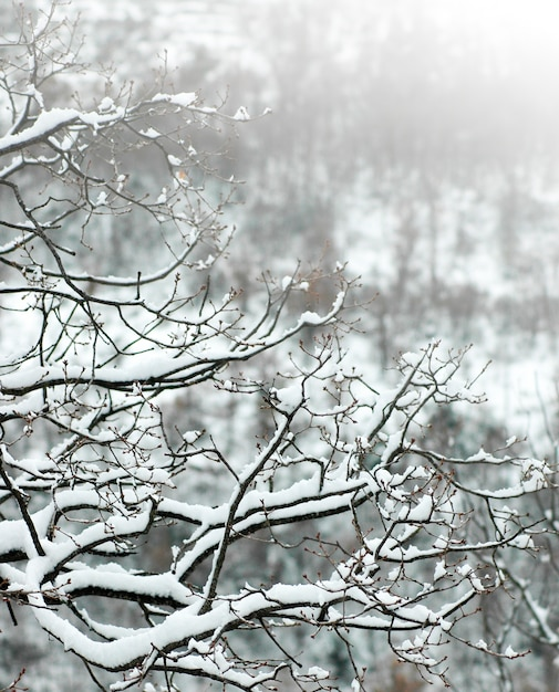 Branches of a tree covered with snow Photo | Free Download