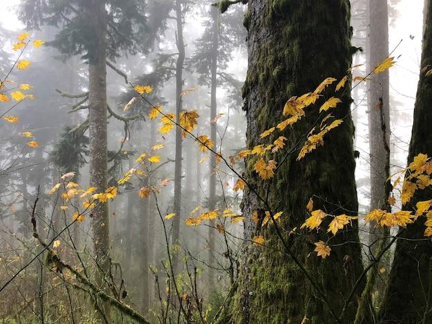 米国オレゴン州の木々に囲まれた黄色の葉を持つ枝 無料写真