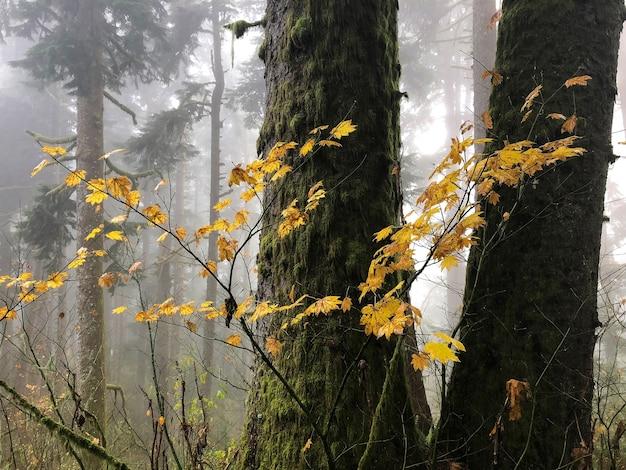 木々に囲まれた黄色の葉の枝 無料写真