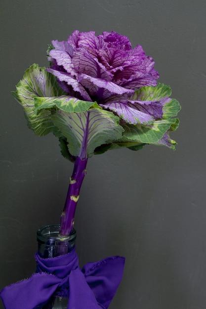 Brassica oleracea capitata или декоративная капуста в стеклянной вазе с фиолетовой лентой на сером фоне, поздравительной открыткой или концепцией Premium Фотографии