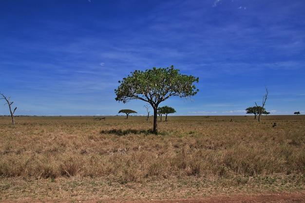 Breadfruit on safari in kenia and tanzania, africa Premium Photo