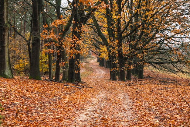 Breathtaking autumn scene with a path in the forest and the leaves on the ground Free Photo