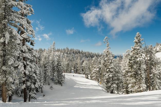 Захватывающие дух пейзажи заснеженного леса, полного елей под чистым небом. Бесплатные Фотографии