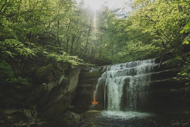 森の中の小さな滝の息をのむようなショット 無料写真