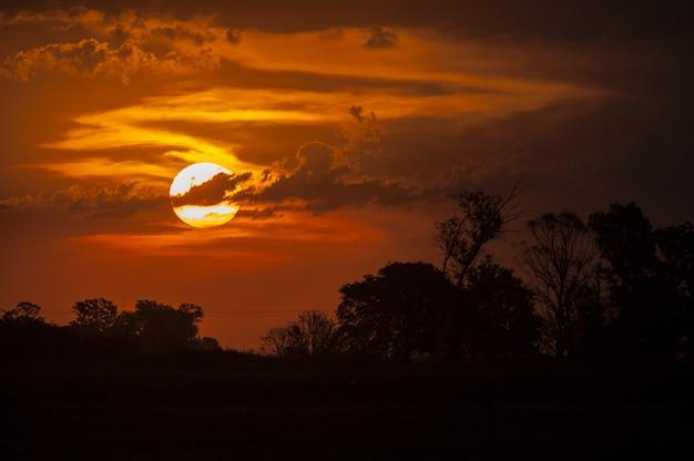 Colpo mozzafiato di sagome di alberi sotto il cielo dorato durante il tramonto Foto Gratuite