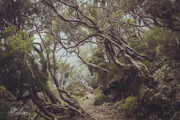 Vista mozzafiato dei bellissimi alberi intorno a un sentiero catturato a madeira, in portogallo Foto Gratuite