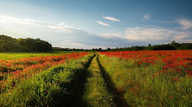 Захватывающий вид на зеленое поле, покрытое маками Бесплатные Фотографии
