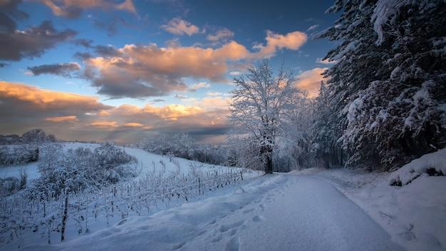 크로아티아의 흐린 하늘 아래 빛나는 눈으로 덮인 통로와 나무의 숨막히는 전경 무료 사진