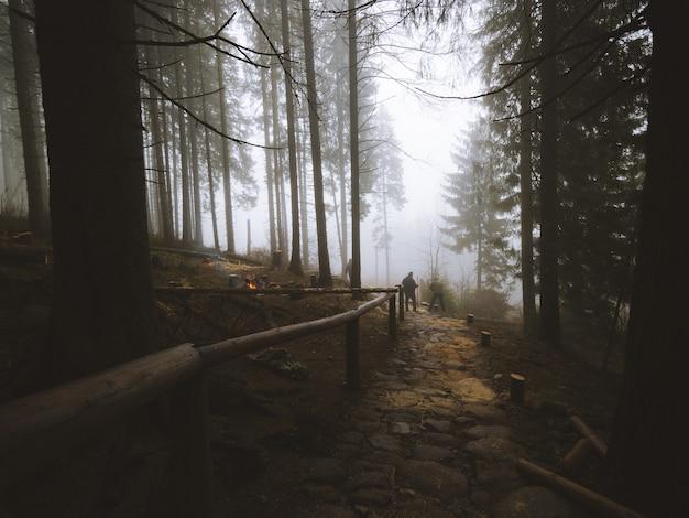 ポルトガル、マデイラで撮影された森の真ん中にある小道の息をのむような眺め 無料写真