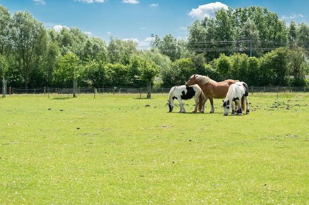 Breeding and animals concept: view of three horses on a farm pasture. Premium Photo