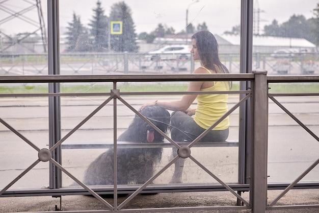 Briard와 여자는 도시 거리에서 버스를 기다리는 동안 대중 교통 정류장에 앉아 있습니다. 프리미엄 사진