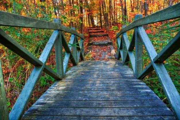 Bridge to fall   hdr Free Photo