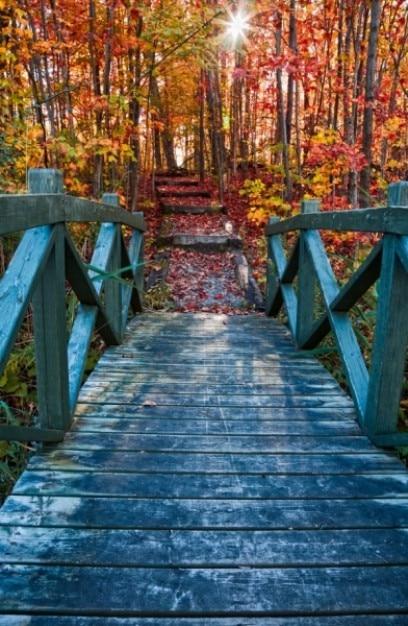 Bridge to fall Free Photo