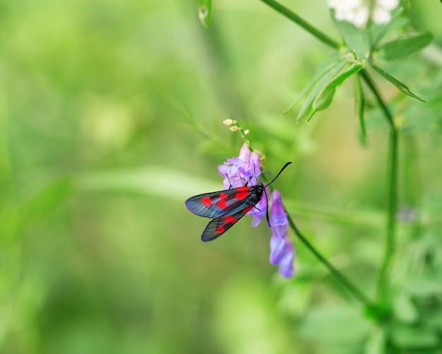 Яркая бабочка и цветок на зеленом фоне размытым с копией пространства. Premium Фотографии