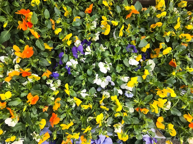 Bright floral background from ornamental plants and flowers Premium Photo