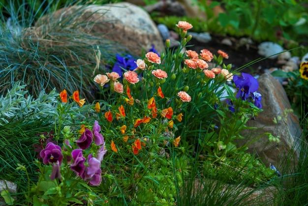 花壇に咲く明るい花、フラワーガーデンのレイアウトのアイデア Premium写真