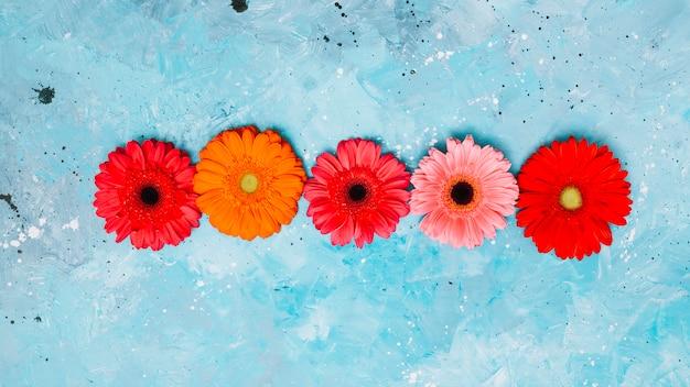 Bright gerbera flowers on blue table Free Photo